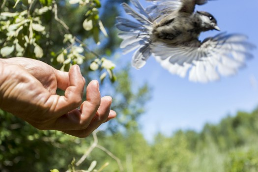 L'enjeu biodiversité